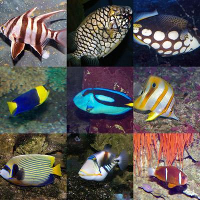 Binomial nomenclature the coastal classroom for Saltwater fish representative species